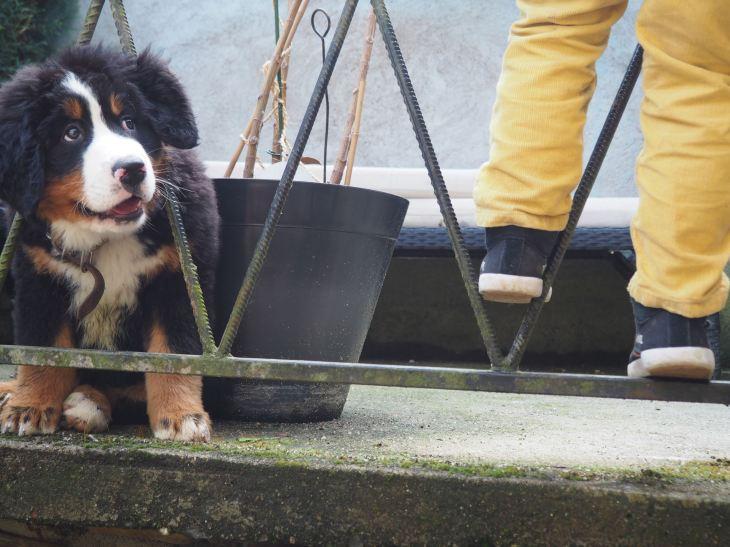 chien et petit garcon-4230687