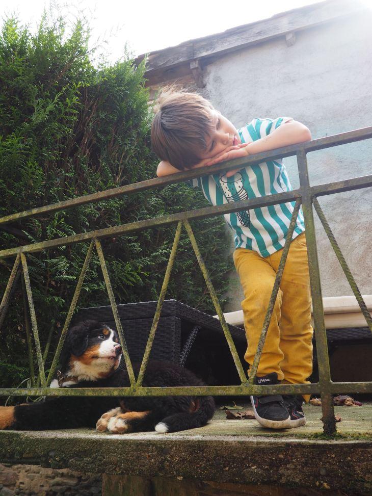 chien et petit garcon-4230746