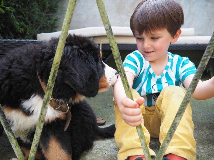 chien et petit garcon-4230757