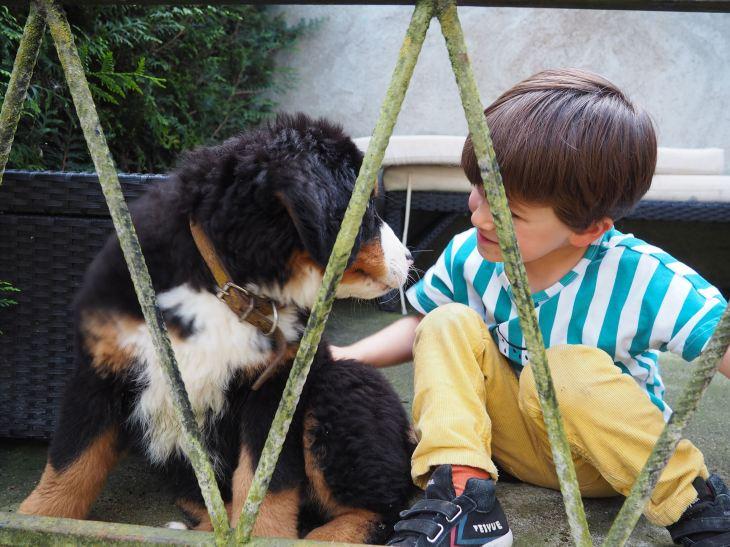 chien et petit garcon-4230763